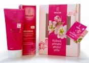 Krásné kosmetické sety čistě přírodní kosmetiky Weleda nabízejí pět variant vánočních balíčků, např.  Růžová přírodní pěsticí péče