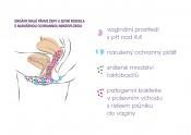 k tématu: probiotický intimní krém ellen®