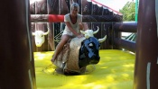 2. Eva Hemalová: Zkrocení býka